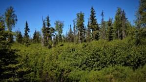 D24 Alaskan Wildwood Ranch®