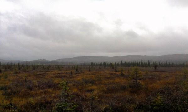 H36 Alaskan Wildwood Ranch® | ©Alaskan Life Realty