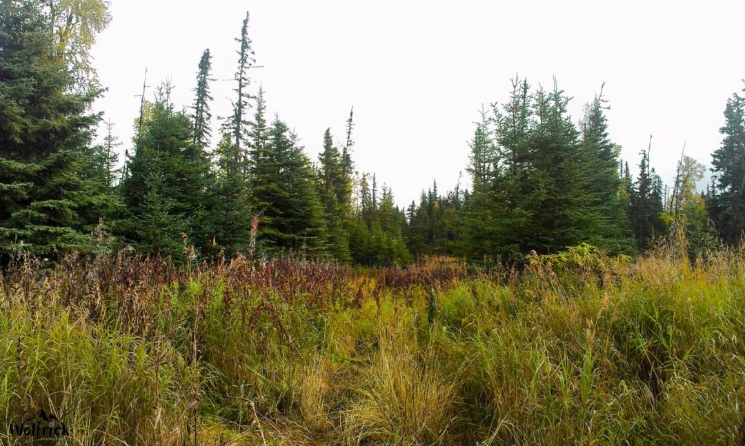 HB Alaskan Wildwood Ranch® | ©Alaskan Life Realty
