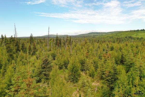 C23 Alaskan Wildwood Ranch®