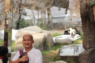 Wake up cute panda