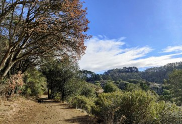 A trail in Tilden Park above El Cerrito, with blue sky and clouds in the background.