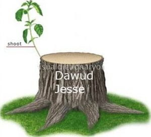 The dynasty of Dawud (PBUH)- now a shoot emerges from the dead stump