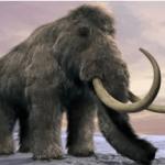 """بالصور : بقايا """"ماموث"""" تغيِّر نظرية الإنسان في العصر الجليدي !"""
