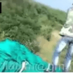 بالفيديو : أسد يهاجم مجموعة عمال في أدغال أفريقيا