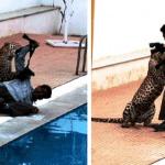 """بالفيديو:""""نمر"""" يهاجم مدرسة في الهند"""