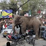 بالفيديو: فيل يزرع الرعب والدمار في مدينة هندية