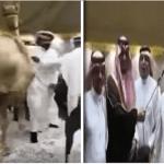 """بالفيديو: مواطن يهدي نائب أمير المدينة المنورة """"ناقة سبوق"""" والأمير يقبلها بشرط!"""