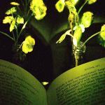 إنجاز علمي غير مسبوق .. بالفيديو : علماء يطورون نباتات مضيئة في الظلام