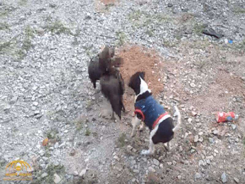 شاهد: كيف تصرف كلب بعدما شاهد معركة بين ديكين؟..  ومغرد: حاجة عجيبة!
