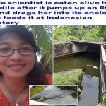 حاولت إطعامه فكانت هي الطعم ..شاهد تمساح ضخم يلتهم امرأة حية في إندونيسيا – فيديو وصور
