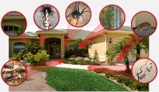 مكافحة الحشرات بالمنزلية