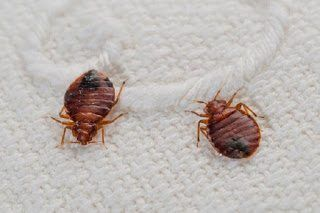 شركة رش حشرات بالخرج