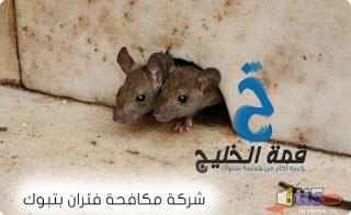 شركات مكافحة فئران بتبوك