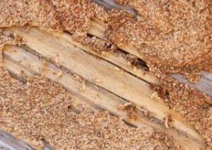 شركة مكافحة النمل الابيض بعنيزة