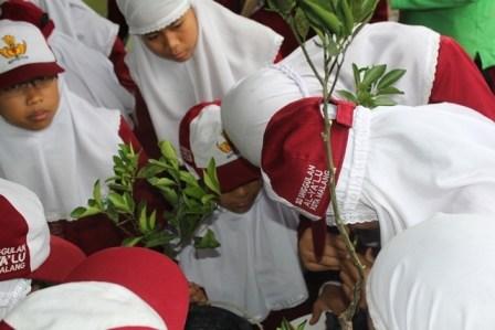 Para siswa SD Unggulan AL-YA'LU mempraktikkan teknik okulasi jeruk di Balitjestro