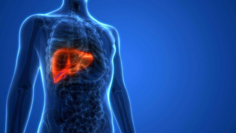مكان الكبد فى جسم الانسان ووظائفه وأخطر الأمراض والتحاليل المهمة العيادة