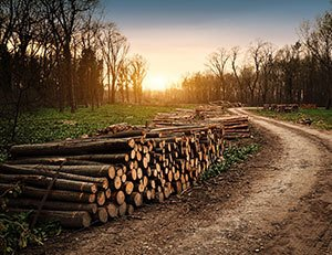Alabama Timber Resources