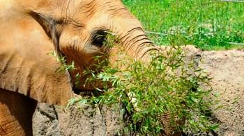 The Birmingham Zoo. (Wynter Byrd/Alabama NewsCenter)