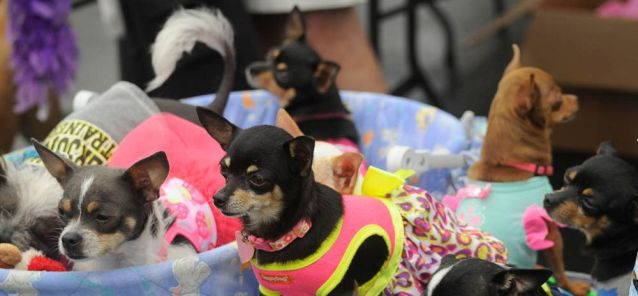Pets enjoy Do Dah Day and a little royal treatment (Photo courtesy of Lee Little)