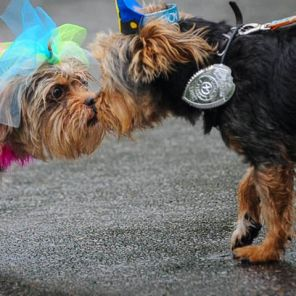 Pets greet and become fast friends at Do Dah Day. (Lee Little)