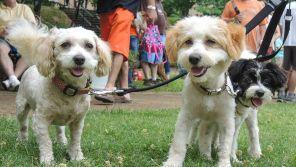 Pets enjoy Do Dah Day. (Lee Little)