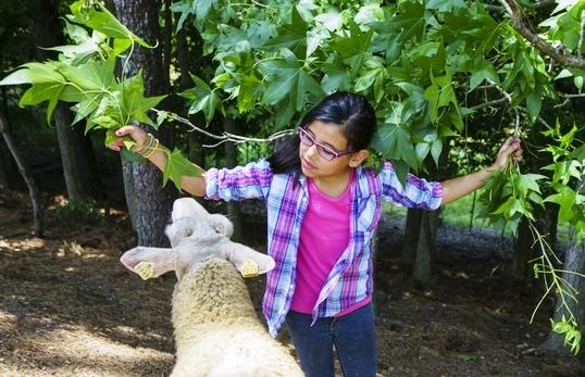 Dayspring Dairy has about 70 sheep. (Mark Sandlin/Alabama NewsCenter)