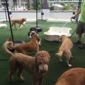 Dogs enjoy rooftop of Dog Days (Keisa Sharpe/Alabama NewsCenter)