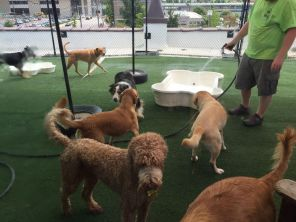 Dogs enjoy rooftop of Dog Days (Keisa Sharpe/Alabama NewsCenter)