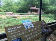 Cards that look like a Pokemon Go screen at the African Lion exhibit at The Birmingham Zoo (Brittany Faush-Johnson/Alabama NewsCenter)