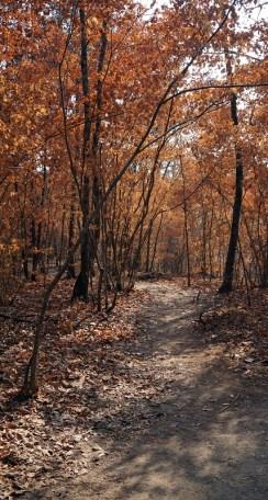 Little River Canyon National Preserve hiking trail. (Erin Harney/Alabama NewsCenter)