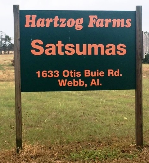 Satsumas go on sale in Southeast Alabama community - Alabama