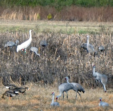 Wheeler National Wildlife Refuge. (Erin Harney/Alabama NewsCenter)