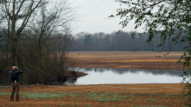 Wheeler National Wildlife Refuge provides ideal backdrop for crane and waterfowl sightings during winter