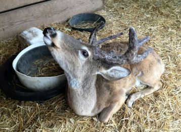 The deer love to be babied. (Donna Cope / Alabama NewsCenter)