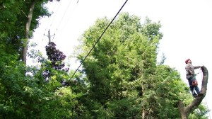 Crews trim trees to keep lines clean of vegetation. (file)