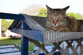Eddins' cat keeps watch over the vineyard. (Michael Tomberlin / Alabama NewsCenter)