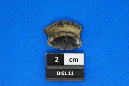 11a Fossil eagle ray tooth. This species still lives in the Gulf of Mexico today. (Jun Ebersole)
