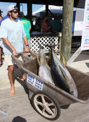 Two yellowfin tuna head back to the cooler after the weigh-in. (Robert DeWitt/Alabama NewsCenter)