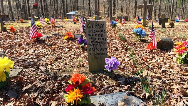Country living editors select each product featured. Alabama S Coon Dog Cemetery Celebrates 80 Years This Labor Day Weekend Alabama Newscenter