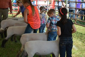 The Cleburne County Fair is Aug. 11-12. (contributed)