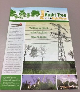 See 'Plant the Right Tree in the Right Place' for tips. (Donna Cope/Alabama NewsCenter)
