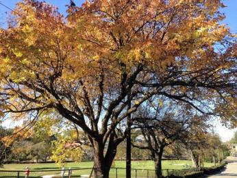 Alabama is dressed in its autumnal splendor. (Michael Sznajderman / Alabama NewsCenter)