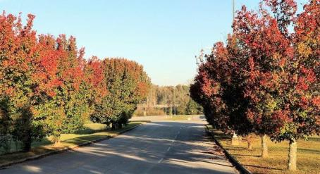 Alabama is always a colorful place, but the hues of autumn are especially beautiful. (Michael Tomberlin / Alabama NewsCenter)