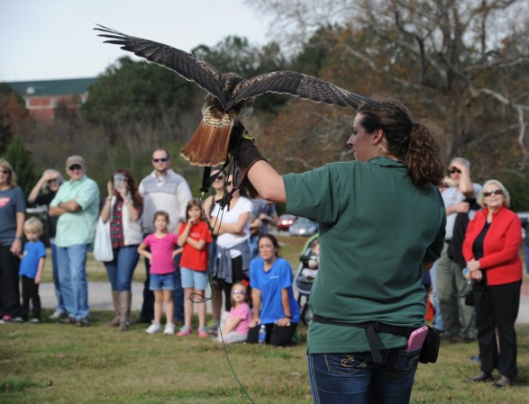 AWC's Red-tailed Hawk flies to the delight of visitors at the Craft and Bake Sale. (Contributed)