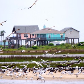 Seagulls on the beach. (Camille Dai/EyeEm, Getty Images)
