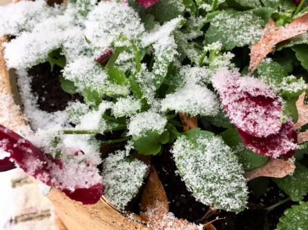 Homewood got a nice dusting of snow. (Bob Blalock / Alabama NewsCenter)
