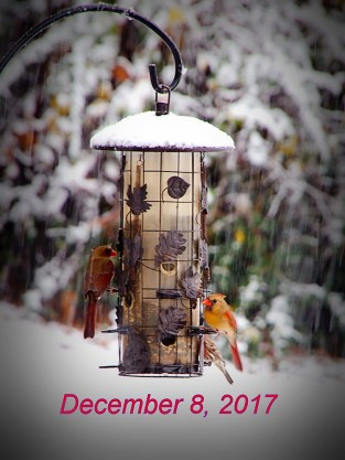 The snow didn't keep the birds away from this feeder in Oxford. (Robert Dark)