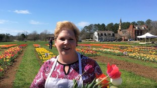 Poole loves tulip season. (Donna Cope/Alabama NewsCenter)
