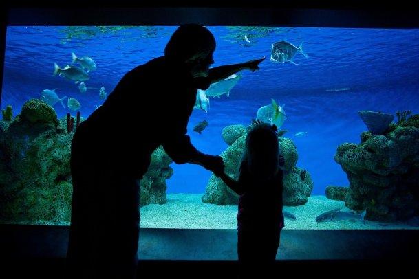 The aquarium at McWane Science Center. (contributed)